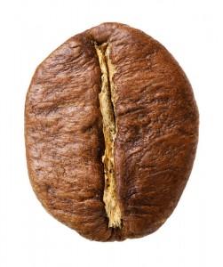 Die Robusta Kaffeebohne ist klein, rundlich und hat einen geraden Schnitt.