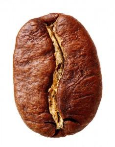 Die Arabica Kaffeebohne hat einen geschwungenen Schnitt und eine ovale, längliche Form.